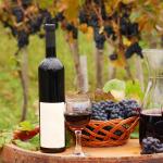 vinicula