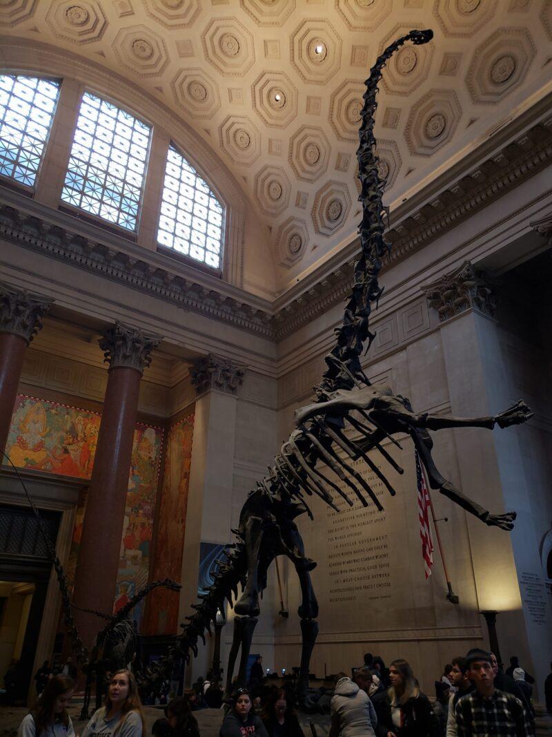 Dinossauro no Museu de História Natural em Nova York
